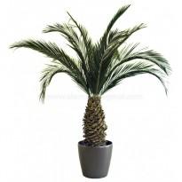 Phoenix Palm Tree